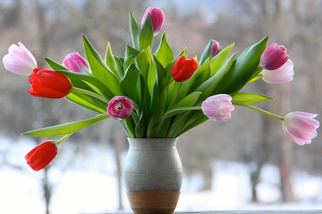 Flower, Nature, Floral, Tulips, Tulip