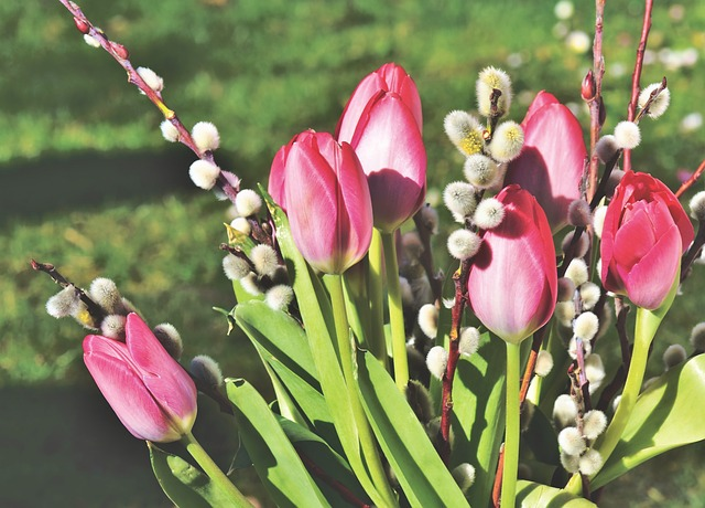 Tulip, Tulip Bouquet, Bouquet, Willow Catkin