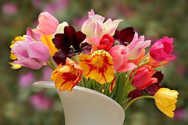 Nature, Plant, Tulips, Tulipa, Colorful, Cut Flowers
