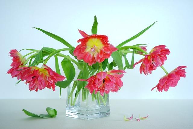 Still Life, Tulips Red, Flowers, Tulip Bouquet, Vase