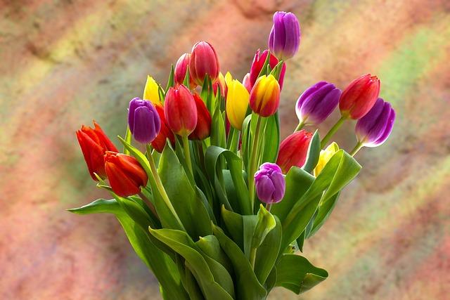 Tulips, Tulip Bouquet, Bouquet, Strauss, Spring Flower