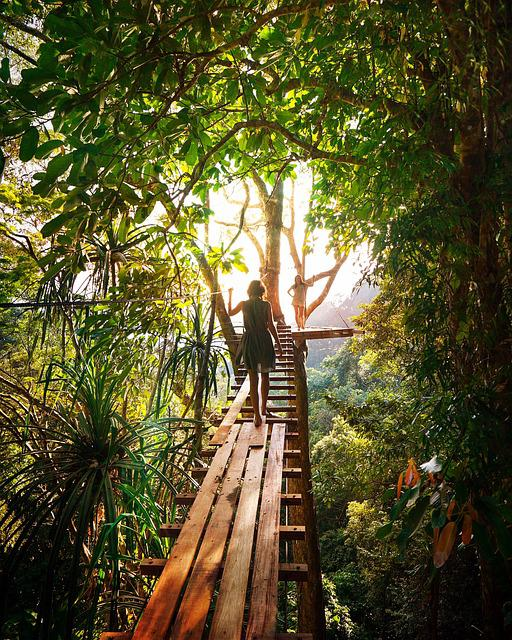 Adventure, Girls, Green, Jungle, Light, Tree, Tunnel