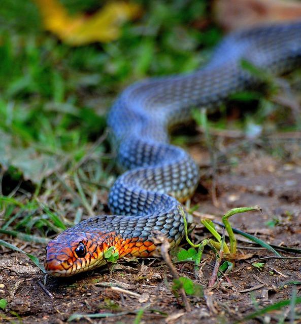 Animals, Nature, Turkey, Snake, Thrace