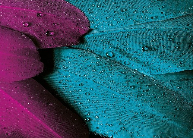 Plumage, Feather, Bird, Pink, Violet, Turquoise