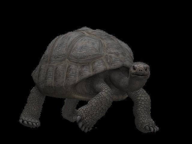 Turtle, Panzer, Animal, Mammal, Digital Art, Isolated