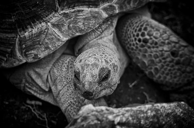 Tortoise, Turtle, Animal, Nature, Reptile, Island