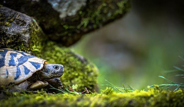 Turtle, Landscape, Nature