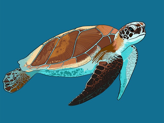 Turtle, Sea Turtle, Animal, Underwater