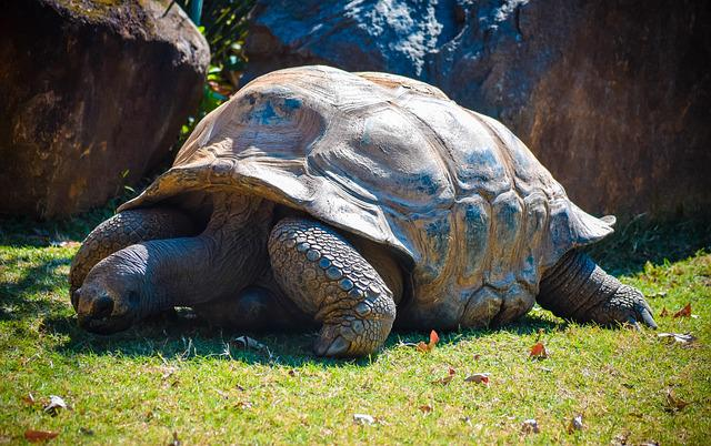 Reptile, Tortoise, Turtle, Wildlife, Zoo, Nature, Shell