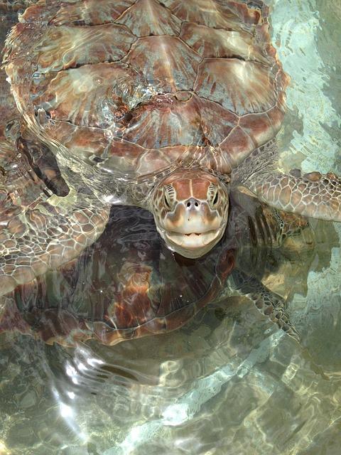 Sea Turtles, Turtles, Nature