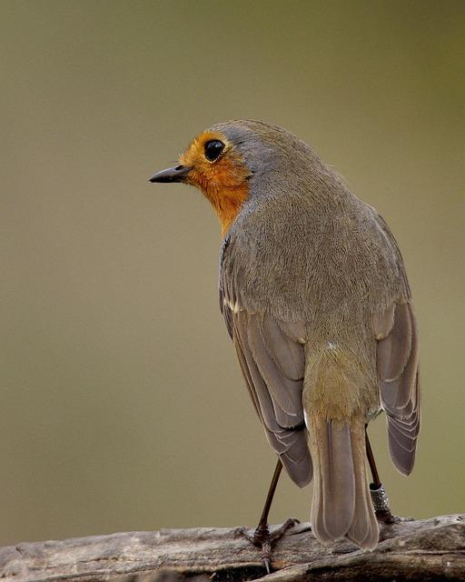 Birds, Fauna, Tuscany
