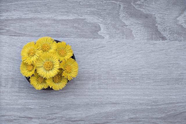 Tussilago Farfara, Flower, Flowers, Yellow