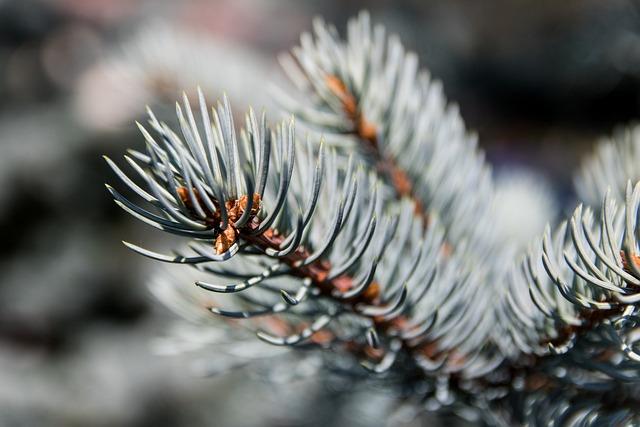Christmas Tree, Coniferous, Tree, Nature, Twigs, Iglak