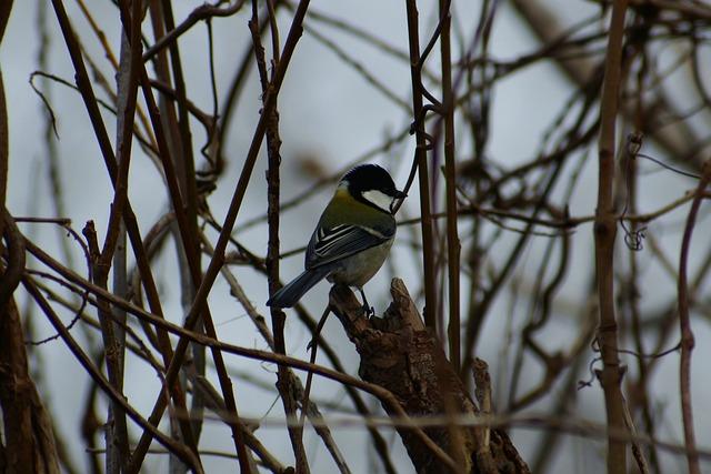 Animal, Forest, Wood, Twigs, Bird, Wild Birds