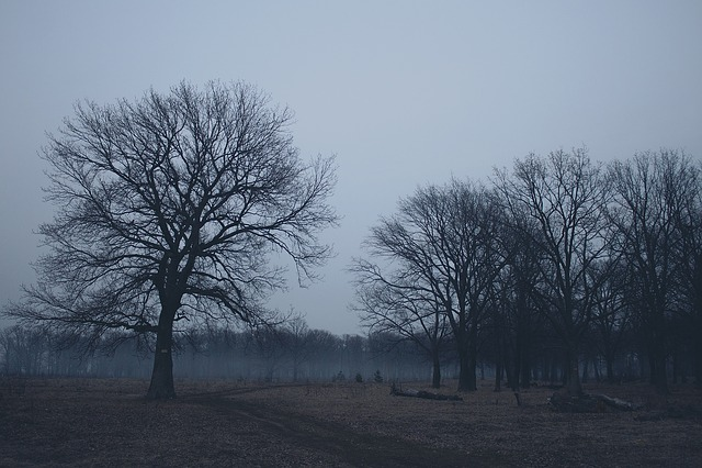 Forest, Twilight, Nature, Landscape, Tree, Spring