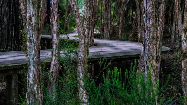 Boardwalk, Trees, Twist, Curved, Wood, Landscape