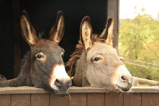 Donkeys, Animals, Duo, Two, Torque, Nature, Mammals