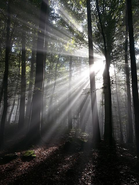 Sunbeam, Rays, Sun, Forest, Tyndall Effect