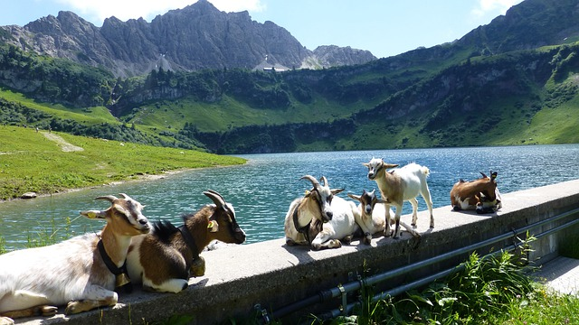 Tyrol, Tannheimertal, Top Of Pools