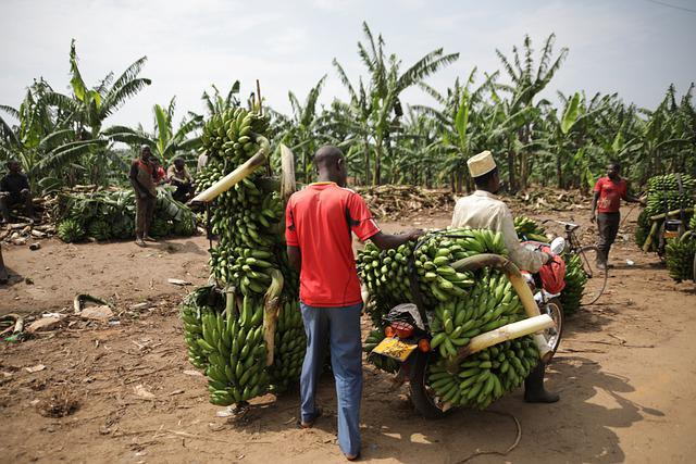 Uganda, Transport, Banana, Fruits, Tropical, Green
