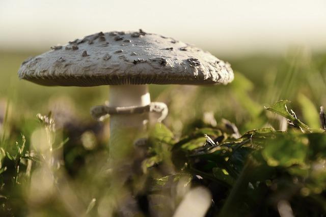 Mushroom, Hat, Autumn, Nature, Undergrowth, White