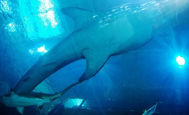 Whale Shark, Sharks, Aquarium, Sea, Animal, Underwater