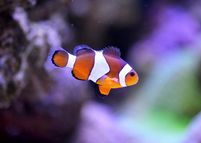 Clownfish, Sea, Aquarium, Clown Fish, Nemo, Underwater