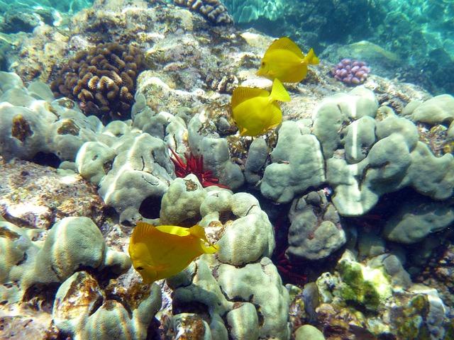 Coral, Fish, Underwater, Fauna, Marine, Hawaii