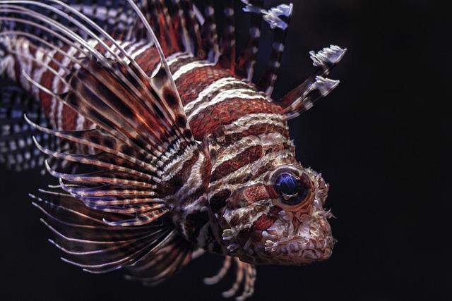 Lionfish, Fish, Sea, Underwater, Aquarius, Coral