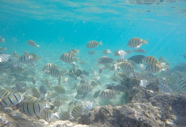 Underwater Fish, Hawaii, Snorkel, Scuba, Underwater