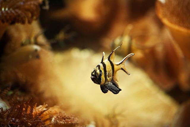 Fish, Aquarium, Meeresbewohner, Underwater