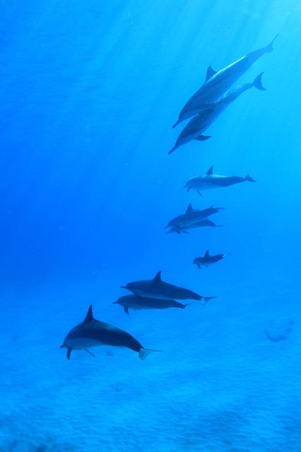 Dolphins, Underwater, Scuba, Fish, Flock, Hawaii, Sea