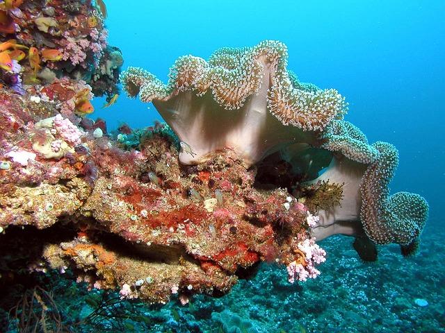 Maldives, Trip, Color, Underwater, Corals, Colors