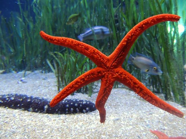 Starfish, Water, Sea, Underwater, Meeresbewohner, Star