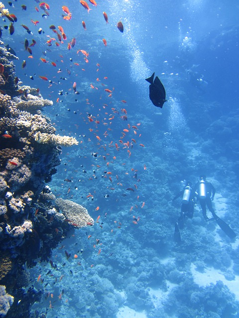 Divers, Underwater, Ocean, Swim, Fish, Coral