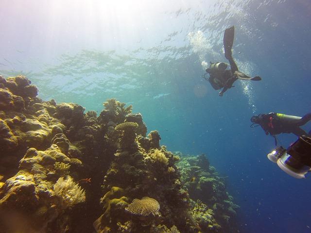 Reef, Diving, Palau, Sea, Water, Ocean, Underwater
