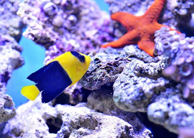 Starfish, Clownfish, Sea, Aquarium, Nemo, Underwater