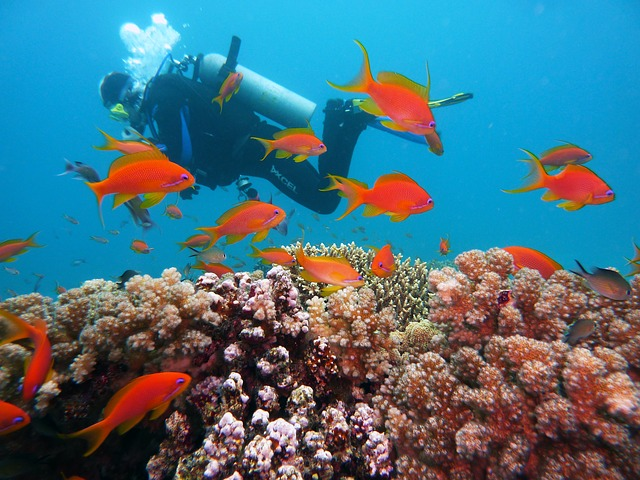 Diving, Underwater, Water, Divers, Underwater World