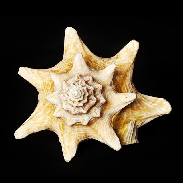 Shell, Sea, Underwater World, Beach, Holiday, Nautilus