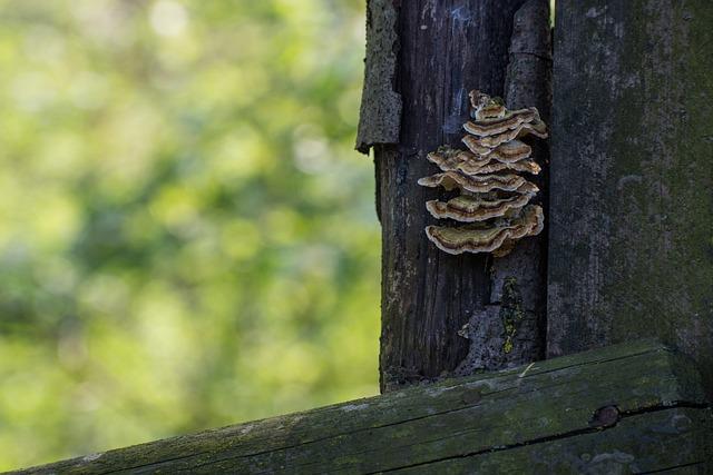 Mushrooms, Wood, Forest, Nature, Underwood, Tree Fungus