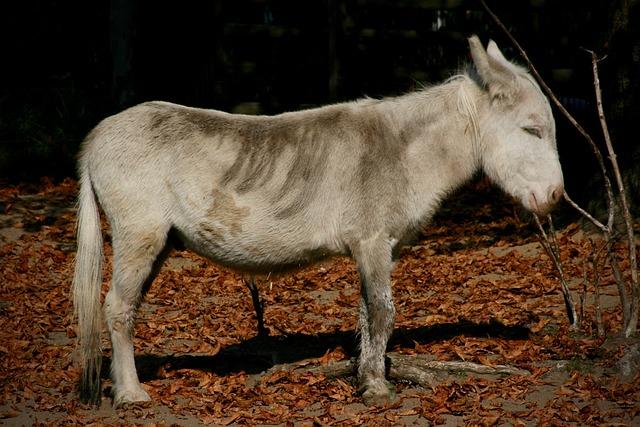 Donkey, Pet, Ungulate