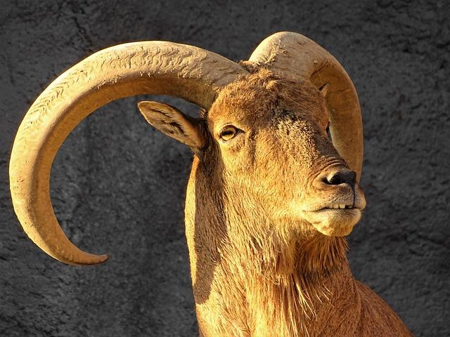 Goat, Horn, Zoo, Beast, Animal, Horns, Ungulates, Cliff