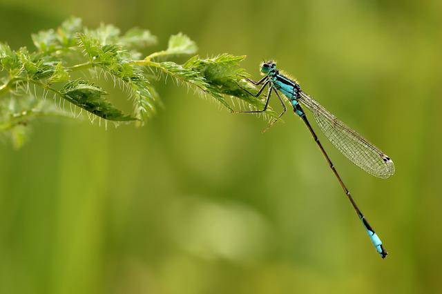 Unlucky Dragonfly, Dragonfly, Small, Insect, Nature