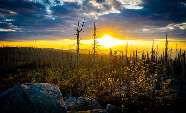 Sunset, Forest, Plešné, Founder, Bohemia, Upper Austria