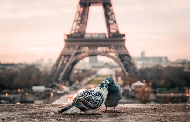 Bird, Couple, Beak, Paris, Eiffel Tower, Urban, City
