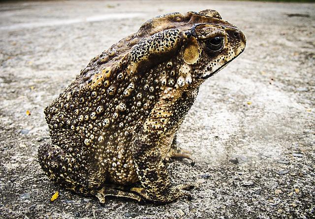 Toad, Frog, Urmonster