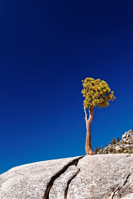 Individual, Tree, California, National Park, Usa
