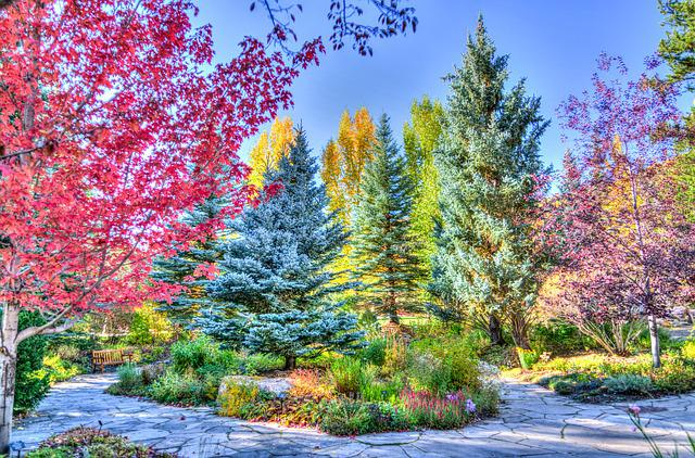 Vail, Colorado, Forest, Foliage, Nature, Usa, Travel