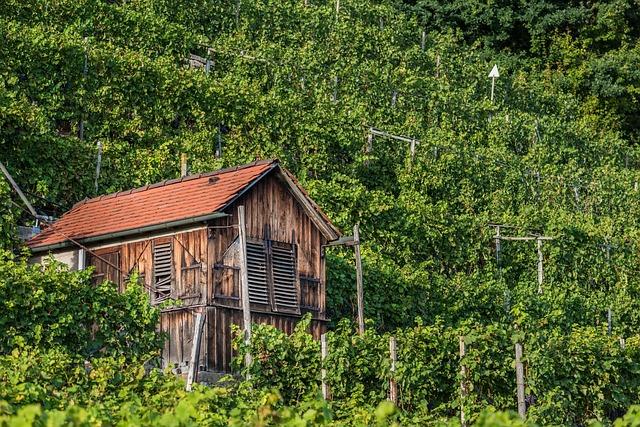 Vineyard, Ludwigsburg Germany, Hut, Vacation, Scale