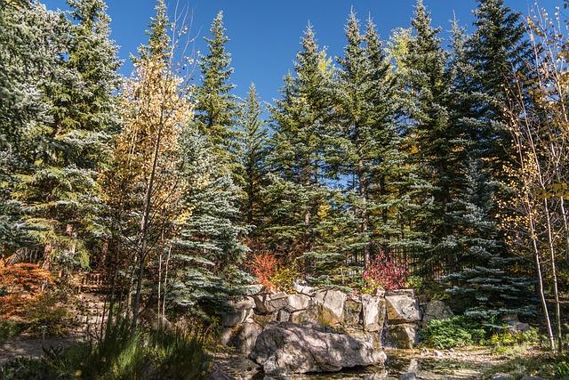 Vail, Colorado, Forest, Nature, Usa, Travel, Landscape